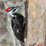 Are Christians Like Woodpeckers-