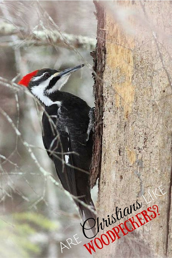 Are Christians Like Woodpeckers really final