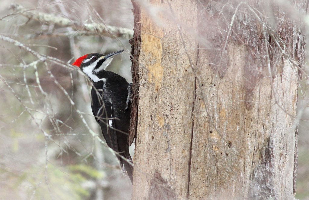 Are Christians Like Woodpeckers?